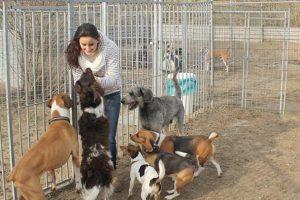Buitenruimte Hondenpension Ovidefarm